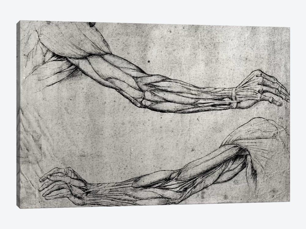 Study of Arms  by Leonardo da Vinci 1-piece Canvas Print