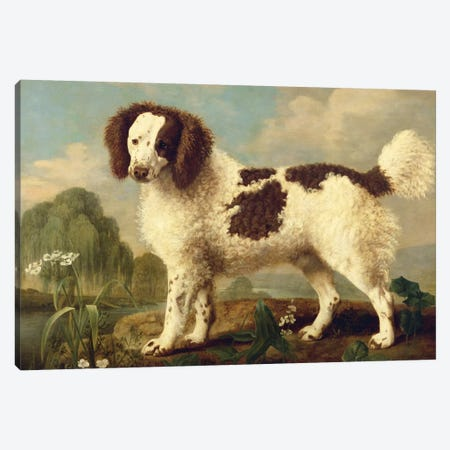 Brown and White Norfolk or Water Spaniel, 1778  Canvas Print #BMN2060} by George Stubbs Canvas Wall Art