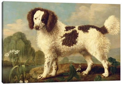 Brown and White Norfolk or Water Spaniel, 1778  Canvas Art Print