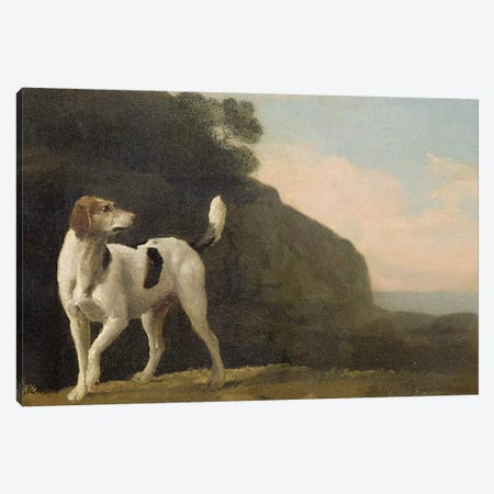 A Foxhound, c.1760  Canvas Print #BMN2061} by George Stubbs Canvas Art