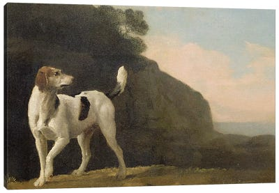 A Foxhound, c.1760  Canvas Art Print