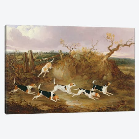Beagles in Full Cry, 1845  Canvas Print #BMN2111} by John Dalby Canvas Artwork