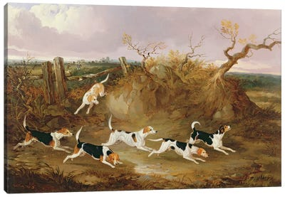 Beagles in Full Cry, 1845  Canvas Art Print