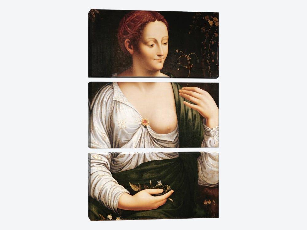 Columbine  by Leonardo da Vinci 3-piece Canvas Art Print