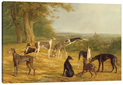 Nine Greyhounds in a Landscape  Canvas Art Print