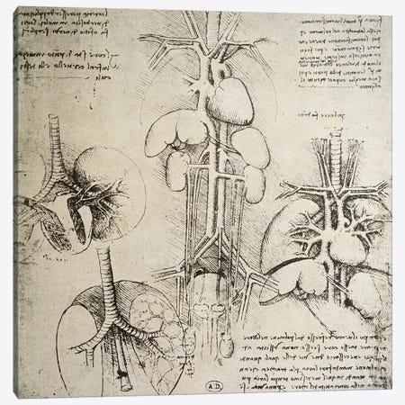The Heart and the Circulation, facsimile of the Windsor book  Canvas Print #BMN2203} by Leonardo da Vinci Canvas Wall Art