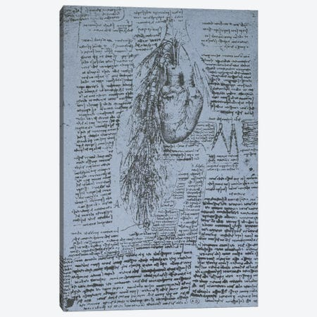 The Heart and the bronchial arteries, facsimile of the Windsor book  Canvas Print #BMN2204} by Leonardo da Vinci Art Print