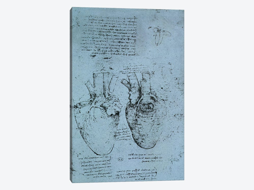 The Heart, facsimile of the Windsor book  by Leonardo da Vinci 1-piece Art Print
