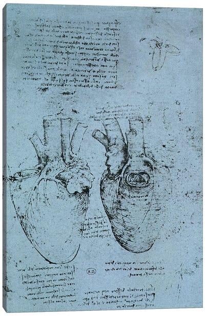 The Heart, facsimile of the Windsor book  Canvas Art Print