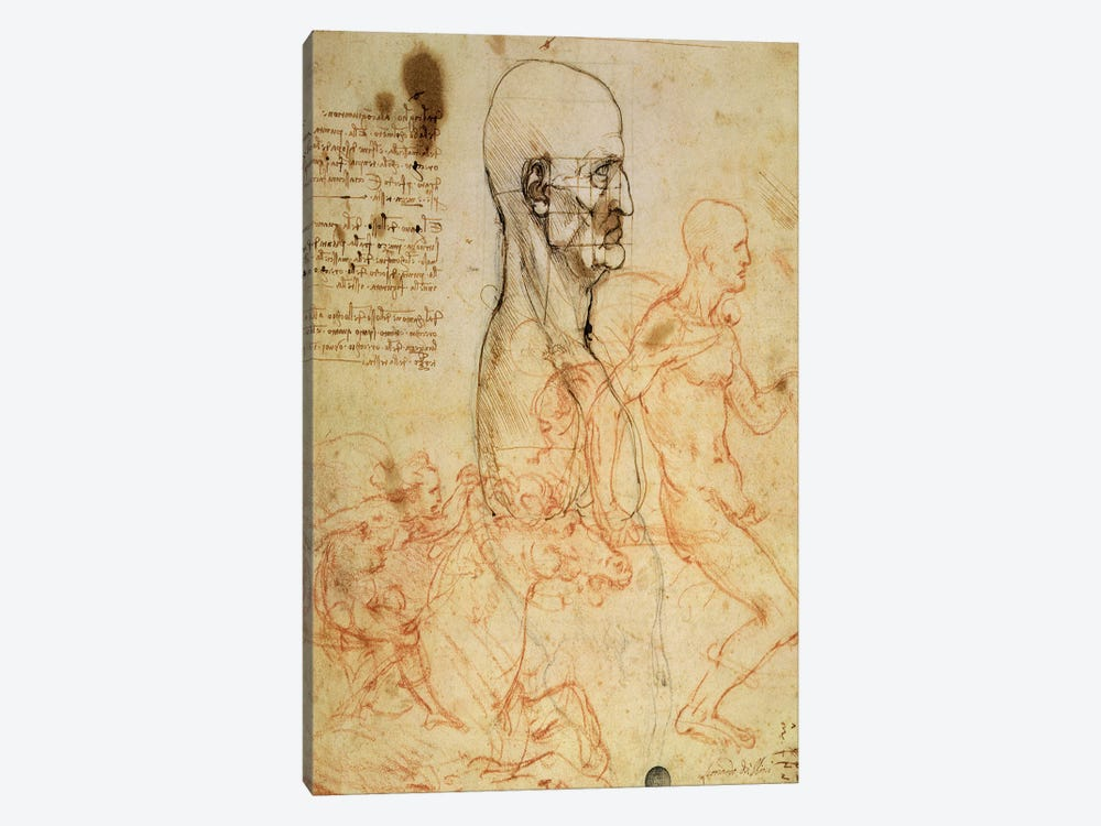 Torso of a Man in Profile, the Head Squared for Proportion, and Sketches of Two Horsemen, c.1490 and c.1504  by Leonardo da Vinci 1-piece Canvas Wall Art