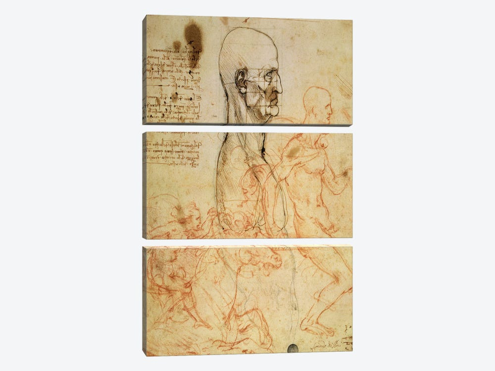 Torso of a Man in Profile, the Head Squared for Proportion, and Sketches of Two Horsemen, c.1490 and c.1504  by Leonardo da Vinci 3-piece Canvas Art