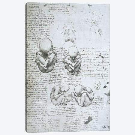 Five Views of a Foetus in the Womb, facsimile copy  Canvas Print #BMN2241} by Leonardo da Vinci Canvas Art