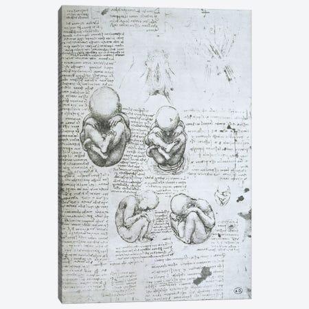 Five Views of a Foetus in the Womb, facsimile copy  Canvas Print #BMN2241} by Leonardo da Vinci Canvas Art