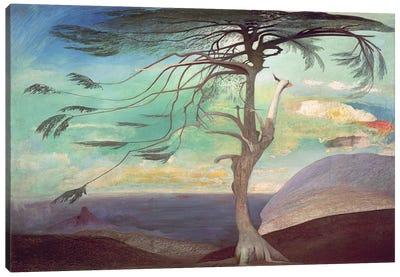 The Solitary Cedar, 1907  Canvas Art Print