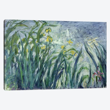 Yellow and Purple Irises, 1924-25  Canvas Print #BMN2270} by Claude Monet Canvas Art Print
