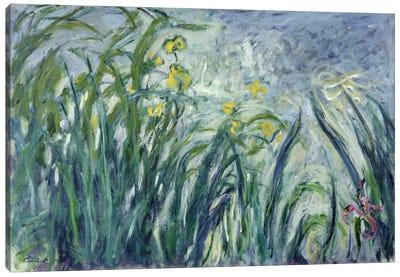 Yellow and Purple Irises, 1924-25  Canvas Art Print