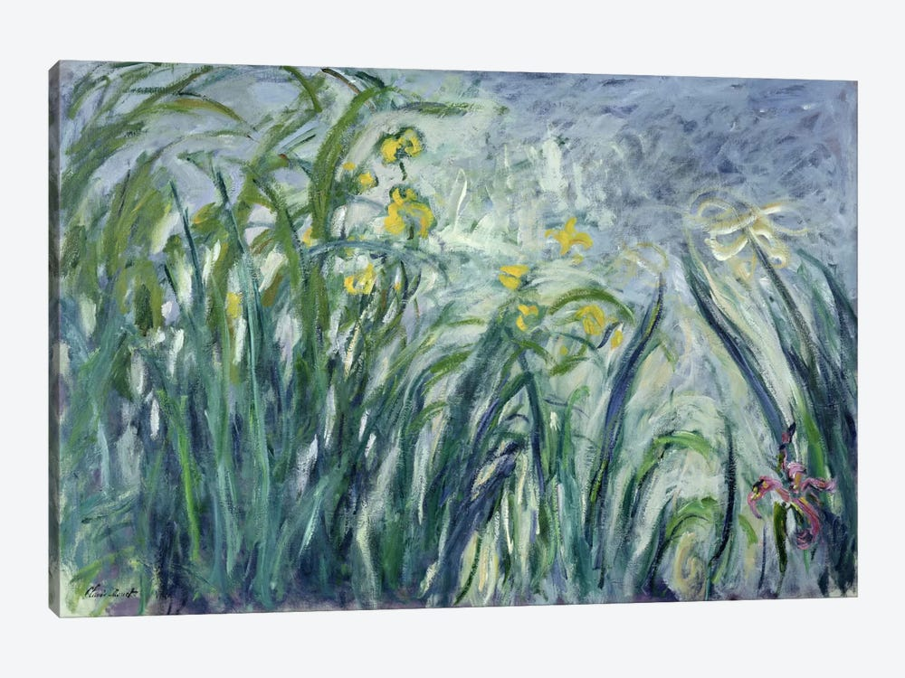 Yellow and Purple Irises, 1924-25  by Claude Monet 1-piece Canvas Print