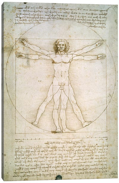 The Proportions of the human figure  Canvas Art Print