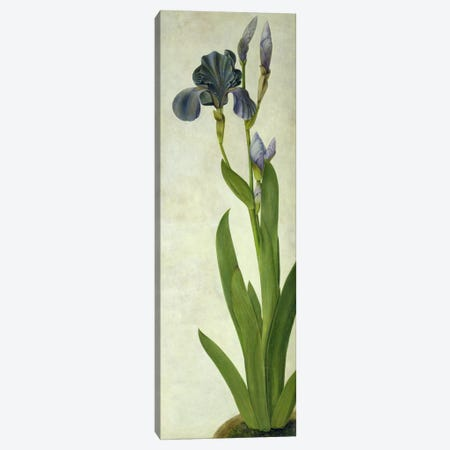An Iris  Canvas Print #BMN2355} by Albrecht Dürer Art Print