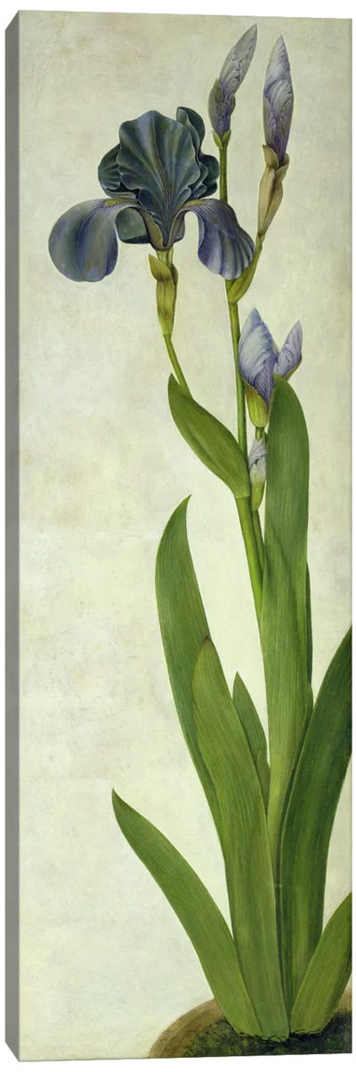 An Iris Canvas Art Print