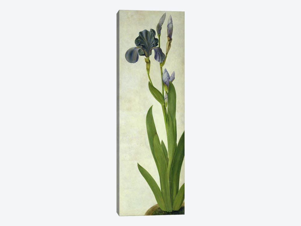 An Iris  by Albrecht Dürer 1-piece Canvas Art Print