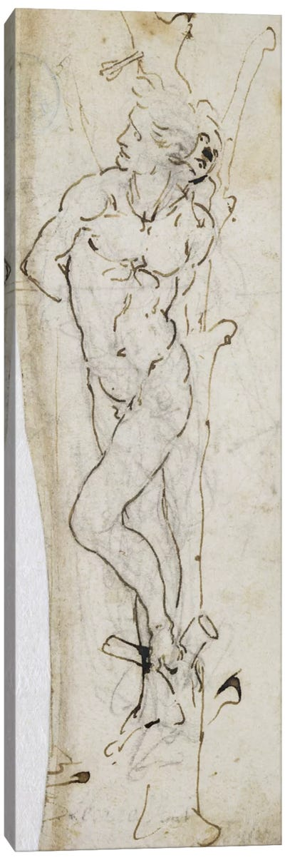 Study of St. Sebastian, 1480-81 by Leonardo da Vinci Canvas Print