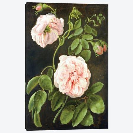 Flower Study  Canvas Print #BMN2377} by Johann Friedrich August Tischbein Canvas Print