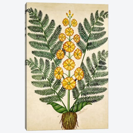 Fern with yellow flowers, plate from a seed merchants in Oisans  Canvas Print #BMN2400} by French School Canvas Art