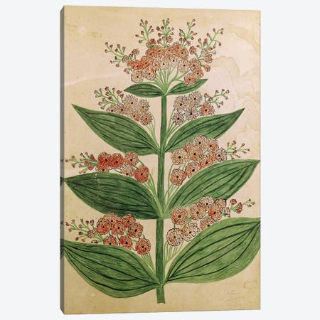 Gentian with imaginary flowers, plate from a seed merchants in Oisans  Canvas Print #BMN2401} by French School Canvas Artwork