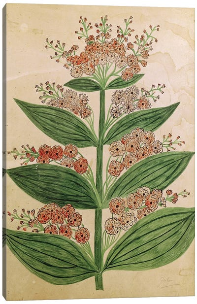 Gentian with imaginary flowers, plate from a seed merchants in Oisans  Canvas Art Print