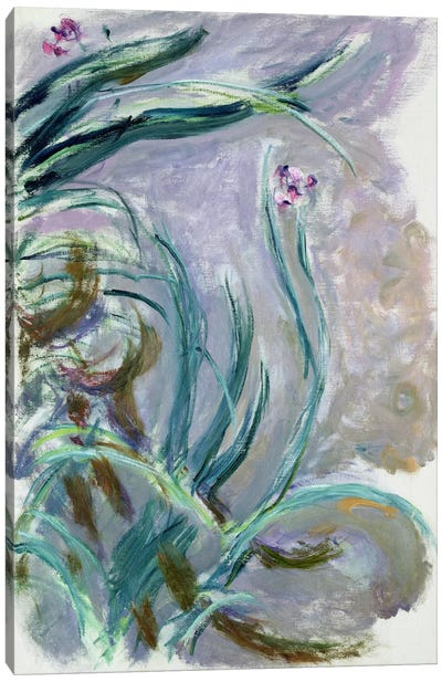 Iris, 1924-25  Canvas Print #BMN2425