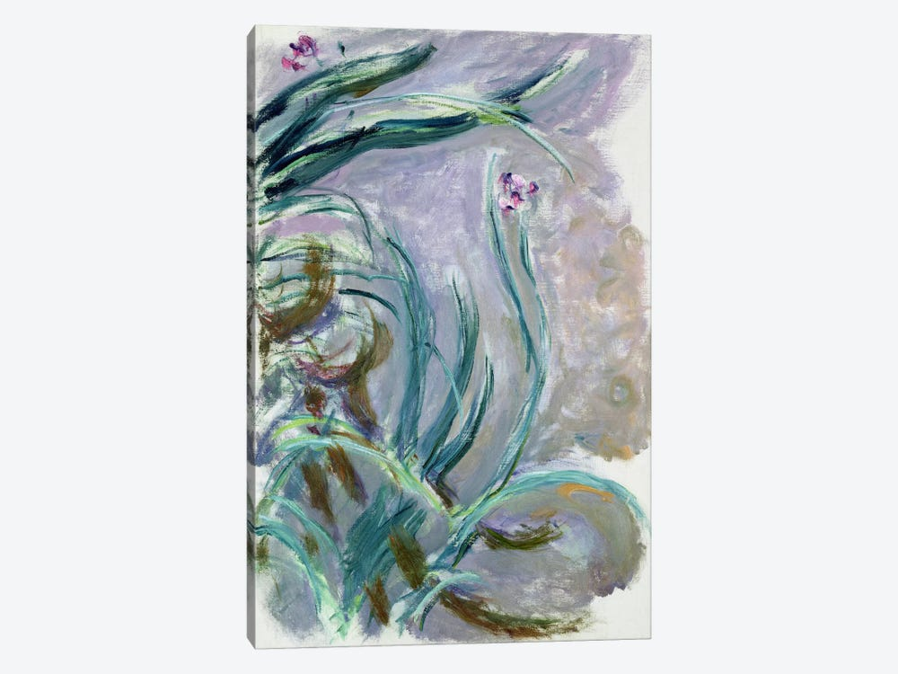 Iris, 1924-25  by Claude Monet 1-piece Canvas Print