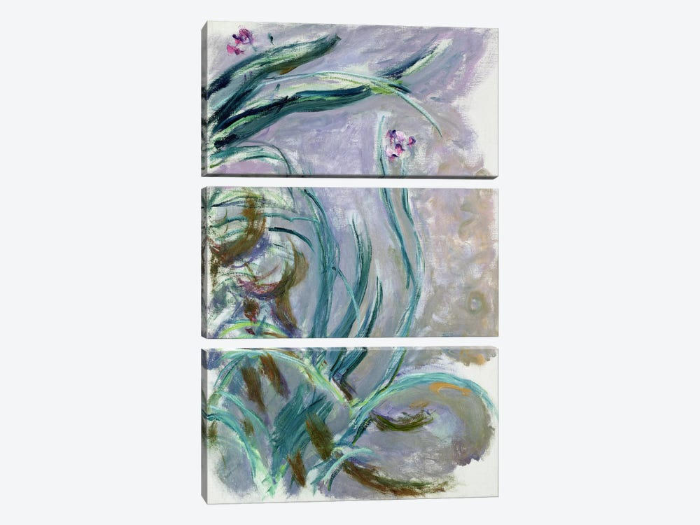 Iris, 1924-25  by Claude Monet 3-piece Art Print