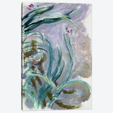 Iris, 1924-25  Canvas Print #BMN2425} by Claude Monet Canvas Print