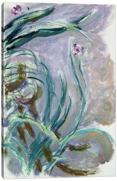 Iris, 1924-25  Canvas Art Print