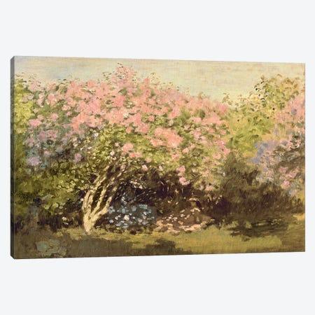 Lilac in the Sun, 1873  Canvas Print #BMN2446} by Claude Monet Canvas Print