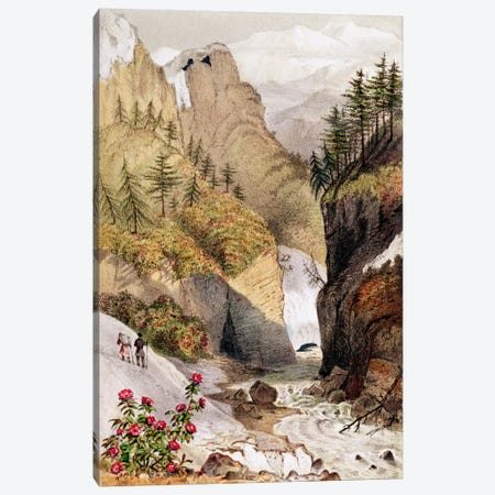 Rhododendrons: Blossom in the snow beds, from Hooker's Journal, 1854 Canvas Print #BMN248} by Unknown Artist Canvas Artwork