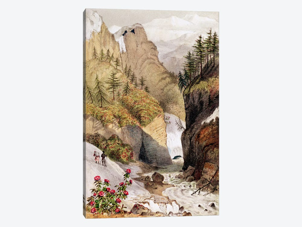 Rhododendrons: Blossom in the snow beds, from Hooker's Journal, 1854 1-piece Canvas Wall Art