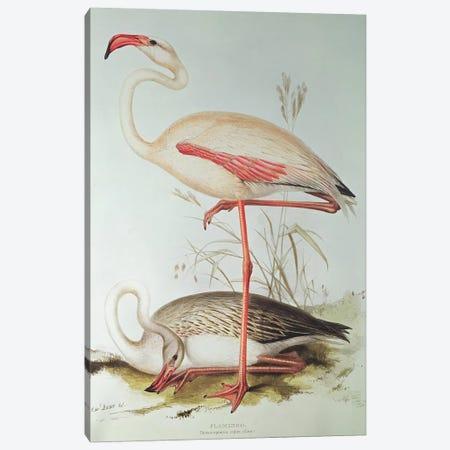 Flamingo Canvas Print #BMN250} by Edward Lear Canvas Art Print