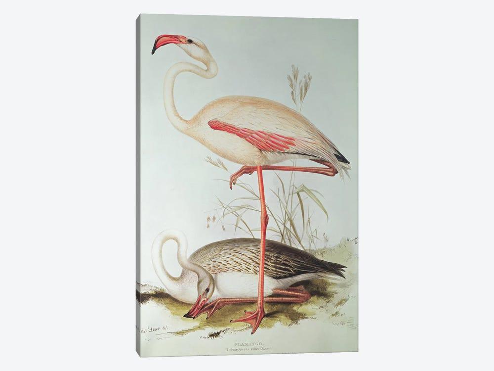 Flamingo by Edward Lear 1-piece Canvas Print