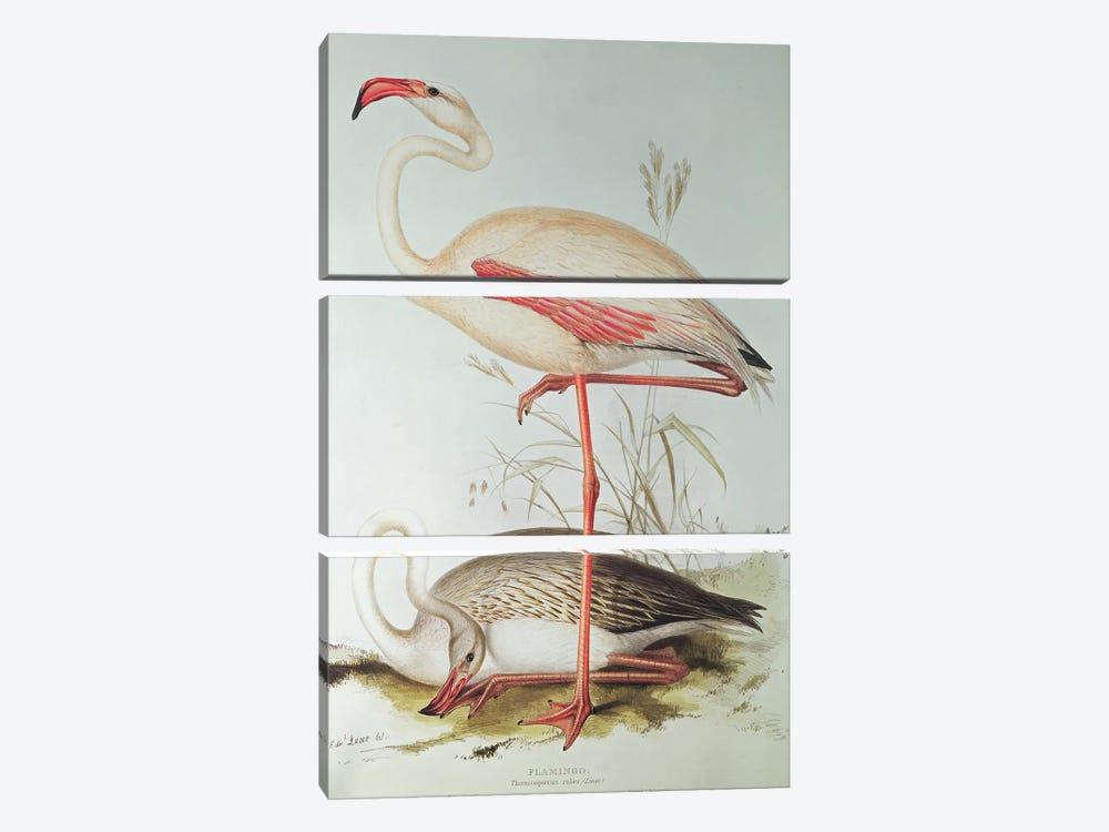Flamingo by Edward Lear 3-piece Canvas Art Print