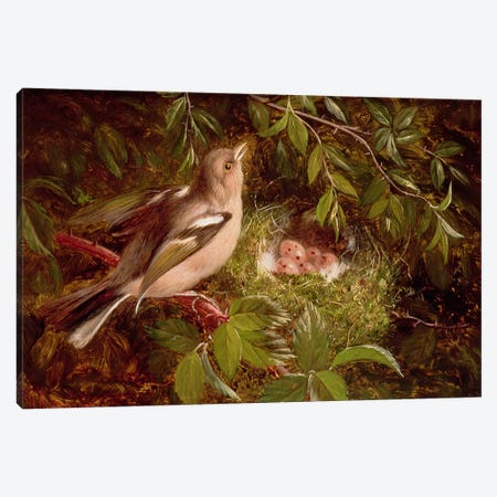 A Chaffinch at its Nest, 1877  Canvas Print #BMN2515} by William Hughes Canvas Art Print