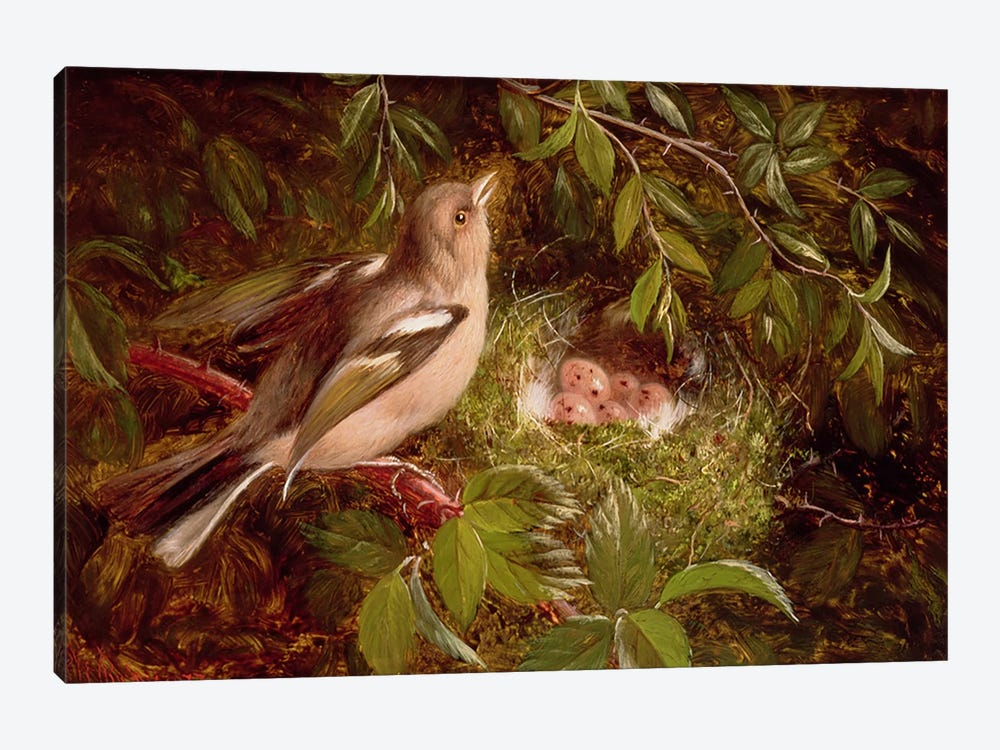 A Chaffinch at its Nest, 1877  by William Hughes 1-piece Art Print