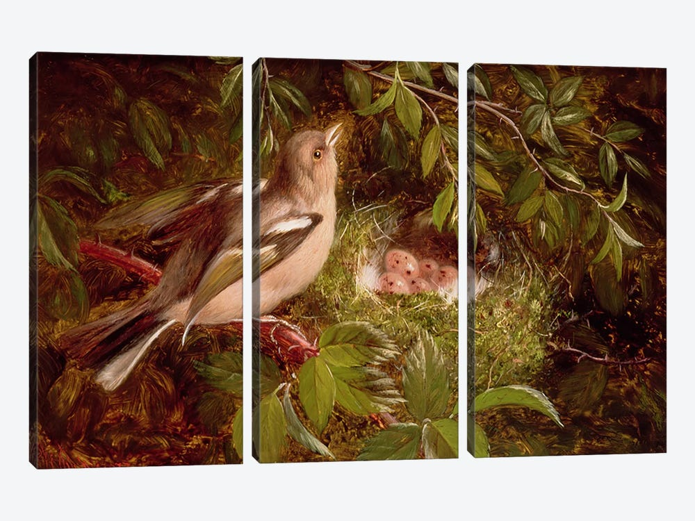 A Chaffinch at its Nest, 1877  by William Hughes 3-piece Art Print