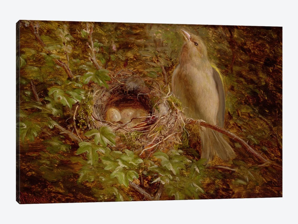 A Greenfinch at its Nest, 1877 by William Hughes 1-piece Canvas Art
