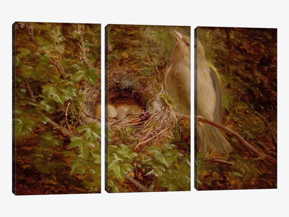 A Greenfinch at its Nest, 1877 by William Hughes 3-piece Canvas Artwork