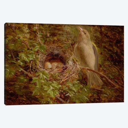 A Greenfinch at its Nest, 1877  Canvas Print #BMN2516} by William Hughes Art Print