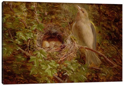 A Greenfinch at its Nest, 1877  Canvas Art Print