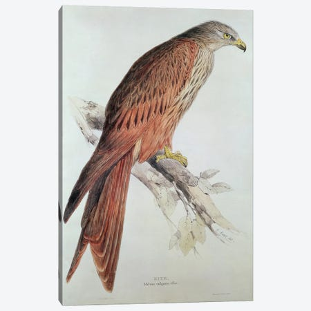 Kite Canvas Print #BMN251} by Edward Lear Art Print