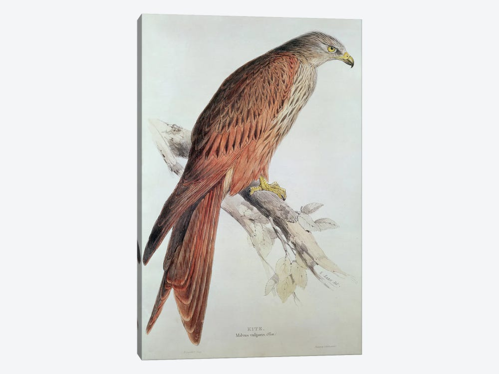 Kite by Edward Lear 1-piece Canvas Wall Art
